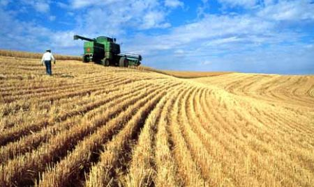 romania-el-dorado-ul-agriculturii-europene-mii-de-fermieri-isi-muta-activitatea-in-tara-noastra-144337