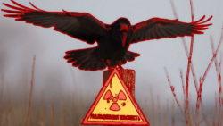 radiation raven chernobyl